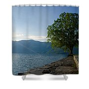 Tree On The Lake Front Shower Curtain