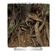 Tree Root's In The Creek Bed Shower Curtain