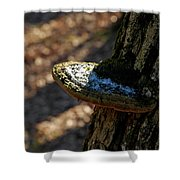 Tree Shelf Snow Sprinkled Fungus Shower Curtain
