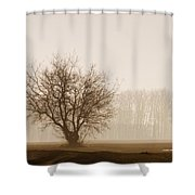 Tree Silhouette In Fog Shower Curtain