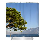 Tree Standing Close To A Lake Shower Curtain