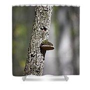 Tree Step Shower Curtain