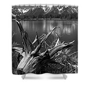 Tree Stump On The Shore Of Lewis Lake At Yellowstone Shower Curtain
