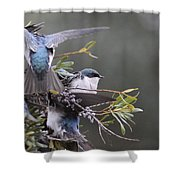 Tree Swallow - Standing Guard Shower Curtain