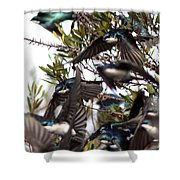 Tree Swallow - All Swallowed Up Shower Curtain
