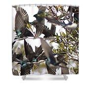 Tree Swallow Frenzy Shower Curtain