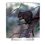 Tree Top Nut Shower Curtain