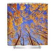 Tree Tops Shower Curtain