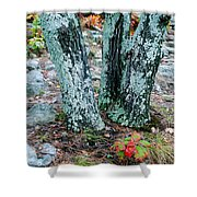 Tree Trio In Lichen At Hawn State Park Shower Curtain