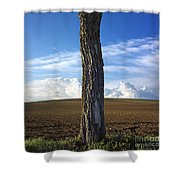 Tree Trunk Shower Curtain