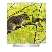 Tree Visitor Shower Curtain