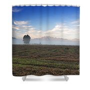 Tree With Fog On The Field Shower Curtain