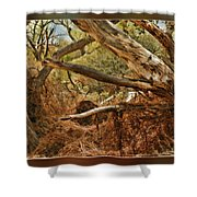 Tree Woods Shower Curtain