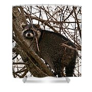 Treed  3331 Shower Curtain
