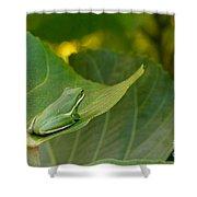 Treefrog Resting Shower Curtain