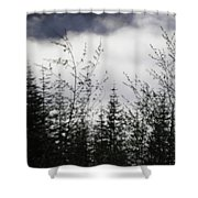 Trees And Clouds Shower Curtain