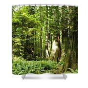 Trees At Cathedral Grove Shower Curtain