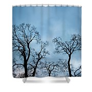 Trees. Autumn. Shower Curtain by Konstantin Dikovsky