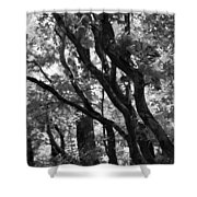 Trees Beautiful Trees Shower Curtain