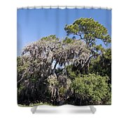 Trees Decorated With Moss Shower Curtain