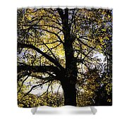 Trees During Autumn Shower Curtain