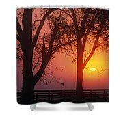 Trees In The Sunrise Shower Curtain