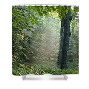 Trees In The Woods In The Early Morning Shower Curtain