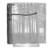 Trees On A Foggy  Morning Shower Curtain