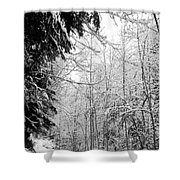Trees Under The Snow Shower Curtain