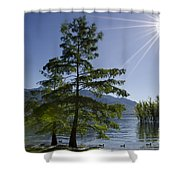 Trees With Sunbeam Shower Curtain