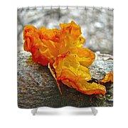 Tremella Mesenterica - Orange Brain Fungus Shower Curtain