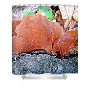 Tremella Mesenterica - Orange Brown Brain Fungus Shower Curtain