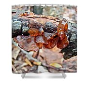 Tremella Mesenterica - Reddish Brown Brain Fungus Shower Curtain