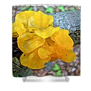 Tremella Mesenterica - Yellow Brain Fungus Shower Curtain