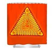 Triceratium Shower Curtain by M. I. Walker