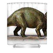 Triceratops Prorsus, A Prehistoric Era Shower Curtain