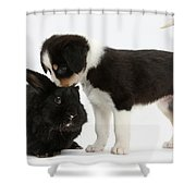 Tricolor Border Collie Pup With Black Shower Curtain