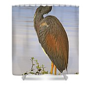 Tricolor Heron Shower Curtain
