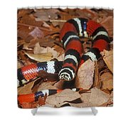 Tricolor Hognose Snake Shower Curtain