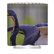 Tricolored Heron About To Fly Shower Curtain