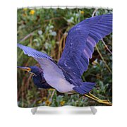 Tricolored Heron In Flight Shower Curtain