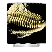 Trilobite Fossil Shower Curtain