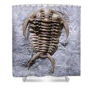 Trilobite Shower Curtain