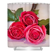 Trio Of Pink Roses Shower Curtain