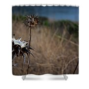 Trio Of Thistles Shower Curtain