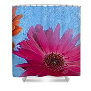 Triptych Gerbera Daisies-two Shower Curtain