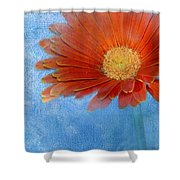 Triptych Gerbera Daisy-one Shower Curtain