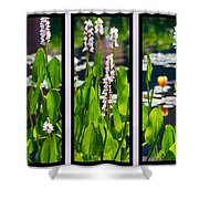 Triptych Of Water Hyacinth Shower Curtain