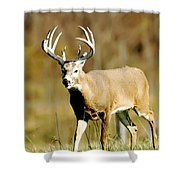 Trophy Buck Shower Curtain