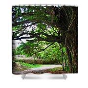Tropical Banyan Path Shower Curtain